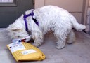 Miss Muffit receives a package from Annabelle (Mike & Megan Burgess)